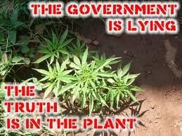 The government lying to us about cannabis