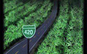 The Green Mile marijuana