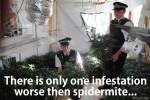 grow room infestation spider mite