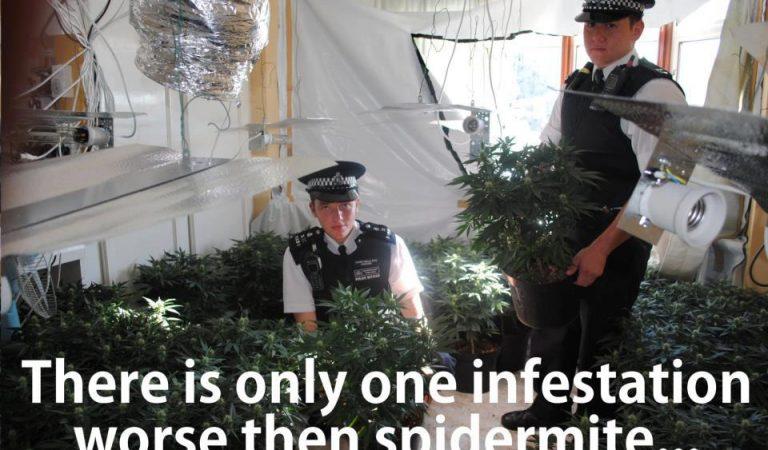 One Infestation Worse Than Spidermite