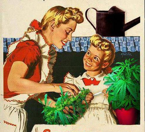 Grow Your Own, Smoke Your Own