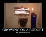 grow weed on a budget