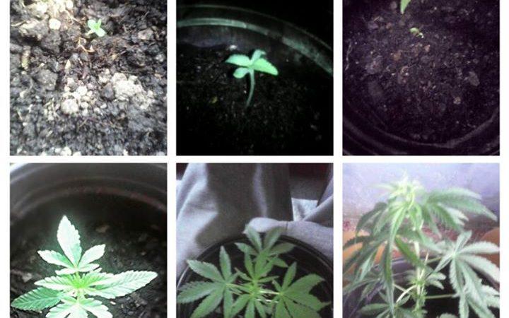 Marijuana is good for the health