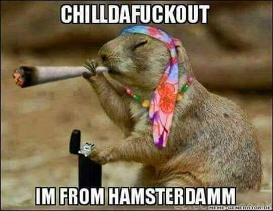 Anyone been to Hamsterdam?