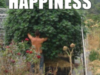 growing tress happiness