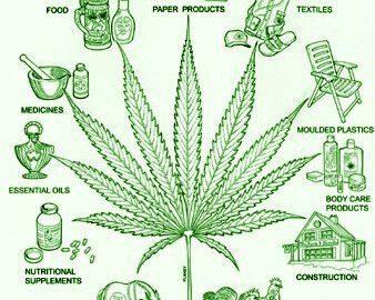 hemp plant utilized