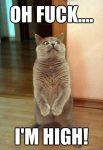 cat looks high