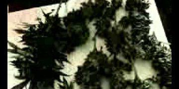 marijuana stop motion