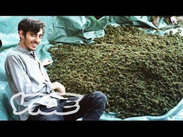 Swaziland Gold mine of Marijuana