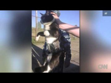 cannabis cat Cat smuggles weed into prison
