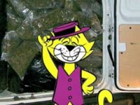 bunn the sensi top cat weed