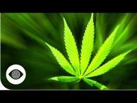 marijuana conspiracy