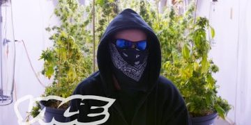 canada corporate weed system