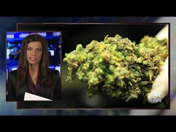 new marijuana study stoned forever