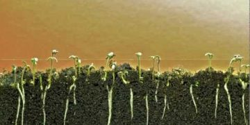 seed germination time-lapse