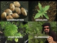 Jorge Cervantes' Ultimate Grow Part 1