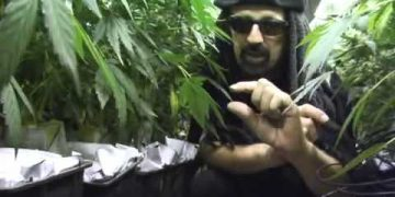 Jorge Cervantes' Ultimate Grow Part 2