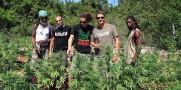 Strain Hunters Jamaica Expedition