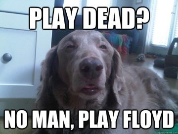 stoner dog play floyd