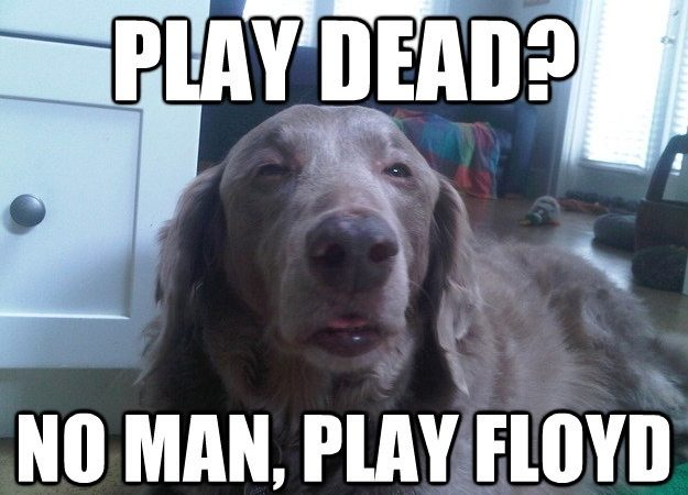 Play dead? No man, play Floyd