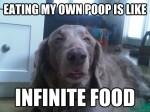 stoner dog eat poop