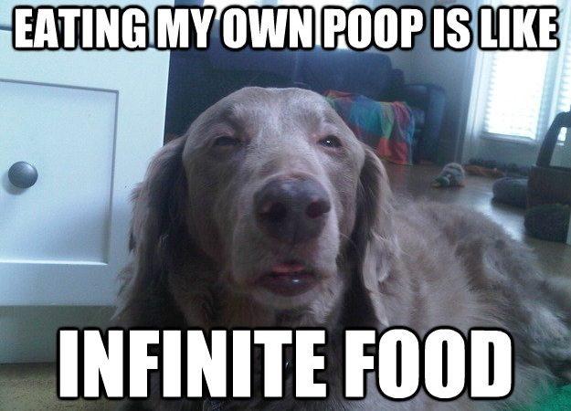Eating my own poop is like infinite food