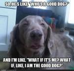 stoned dog meme