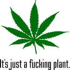 It's just a plant meme