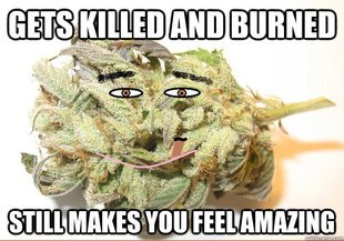 Gets killed and burnt weed meme