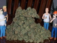 king of the hill weed