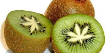 cannabis leaf kiwi fruit