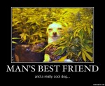 mans best friend stoned dog grow