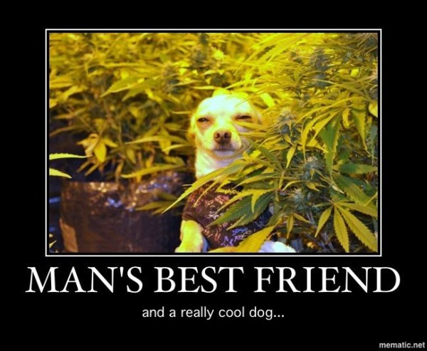 Image result for Really Good Weed Memes