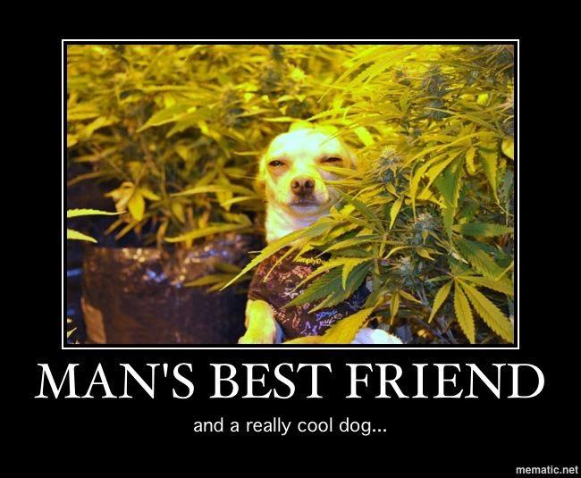 mans best friend stoned dog grow