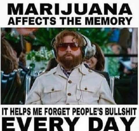 Marijuana effects the memory