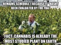 studied cannabis schedule 1 drug