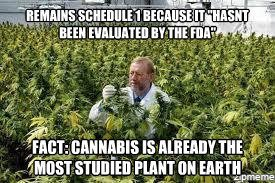 studied cannabis schedule 1 drug