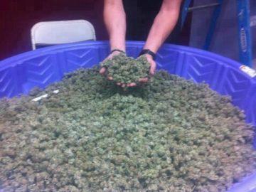 huge bowl of pot