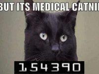 Medicinal Catnip cat meme