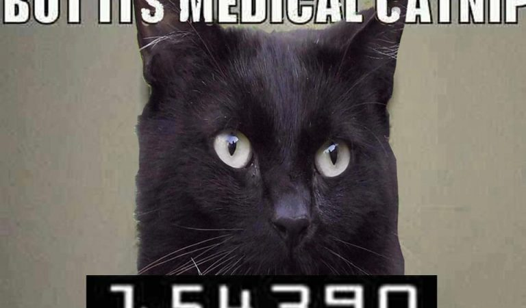 But It's Medicinal Catnip