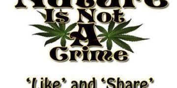 Nature Is Not A Crime cannabis meme