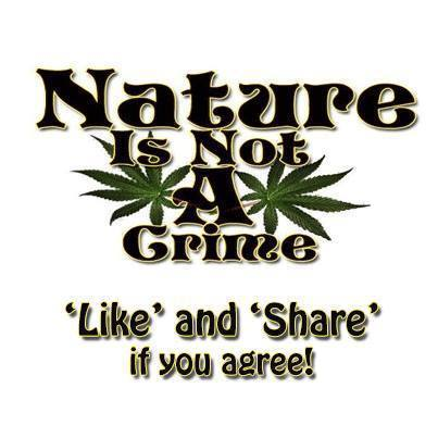 Nature Is Not A Crime