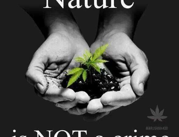 Nature is not a crime!