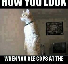cops at the neighbors house paranoid cat