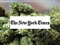 new york times endorse marijuana reform
