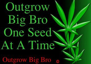 Out grow big bro, one seed at a time