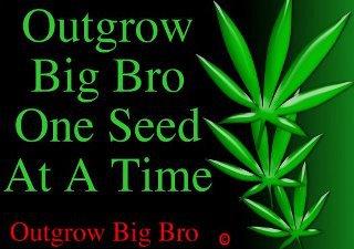 Out grow big bro one seed