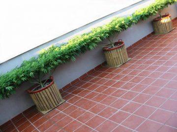 seath grow outdoor scrog scrogging