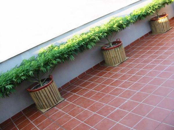 outdoor-scrog-grow-balcony-600x450.jpg