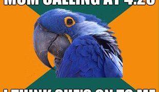 Mom calling at 4:20 paranoid parrot meme